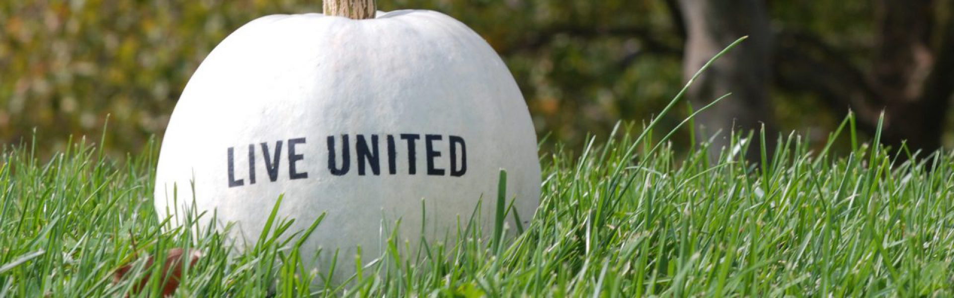 United Way of Albany County